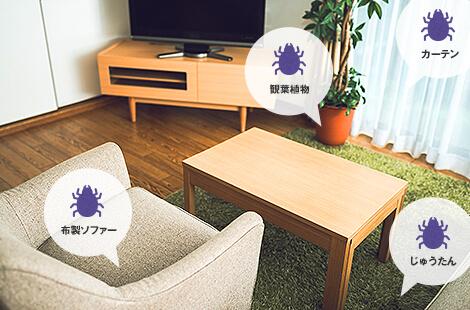 カーテン・観葉植物・布製ソファー・じゅうたん
